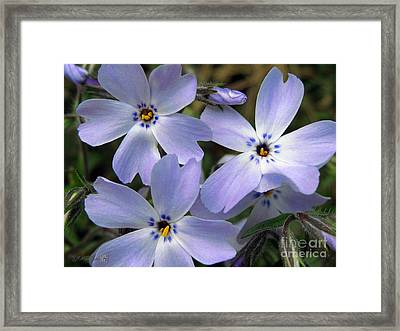 Framed Print featuring the photograph Creeping Phlox by J McCombie