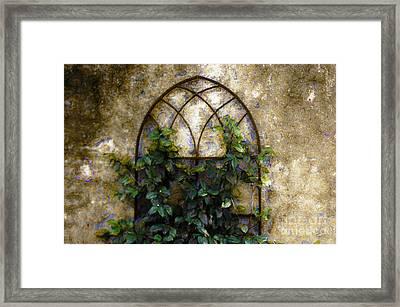 Creeping Vine 1 Framed Print