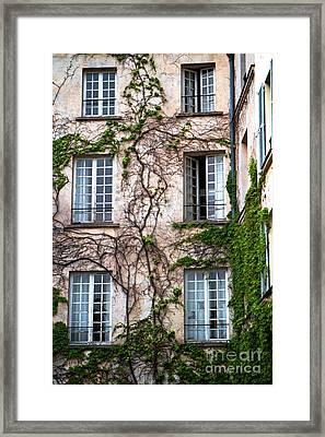 Creeping Vines Framed Print
