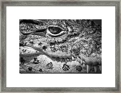 Creepy Crawler Framed Print by James Woody