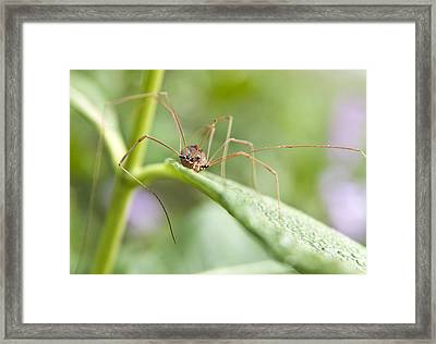 Framed Print featuring the photograph Creepy Crawly Spider by Jeannette Hunt