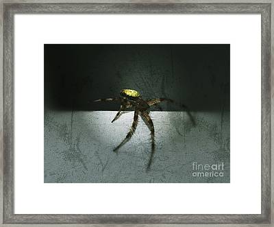 Creepy Spider Framed Print by Christy Bruna