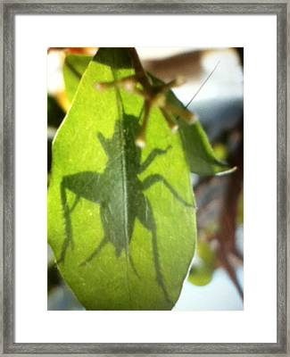 Cricket Shadow Framed Print