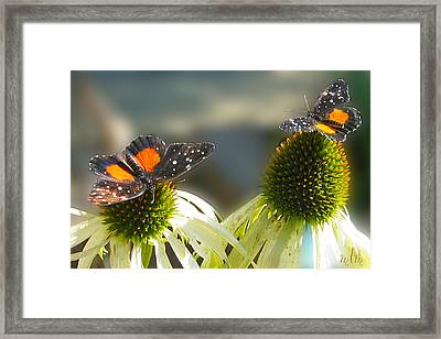 Crimson Patch Butterfly Framed Print
