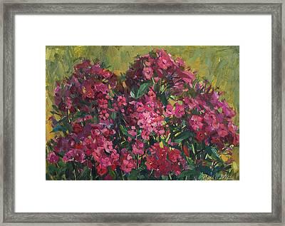 Crimson Phloxes Framed Print by Juliya Zhukova