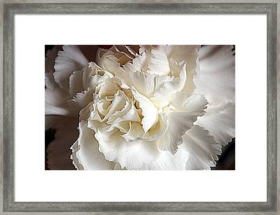 Framed Print featuring the photograph Crisp Carnation Photo by Deniece Platt