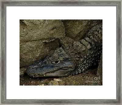 Gator Rock Framed Print