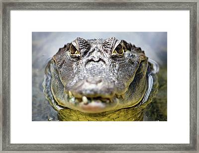 Crocodile Eyes Framed Print