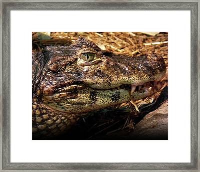 Crocodile Framed Print by Jeremy Martinson