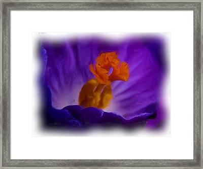Crocus In Oil Framed Print