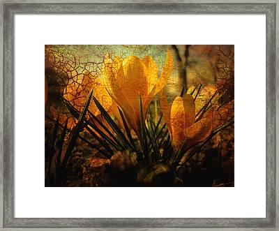 Crocus In Spring Bloom Framed Print by Ann Powell