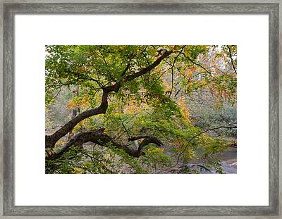 Crooked Limb Framed Print by David Troxel