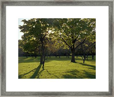 Cross In The Trees Framed Print by John Bowers