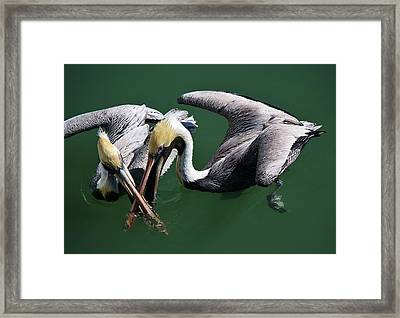 Crossed Up Framed Print by Paulette Thomas
