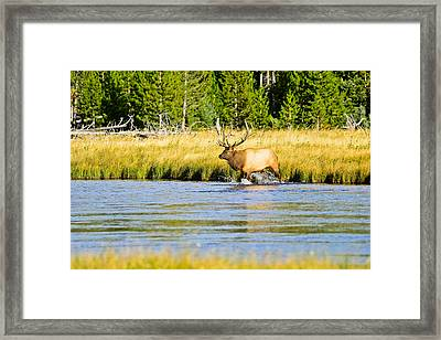 Crossing The Madison Framed Print