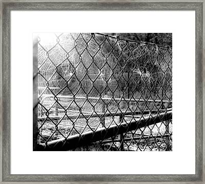 Crosslinked - Vernetzt Framed Print by Mimulux patricia no No