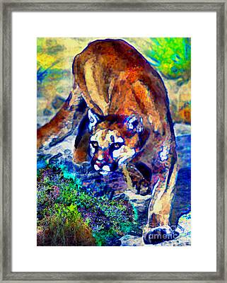 Crouching Cougar Framed Print
