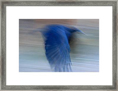 Crow Motion Framed Print