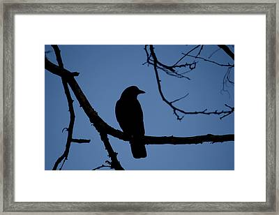Crow Silhouette Framed Print