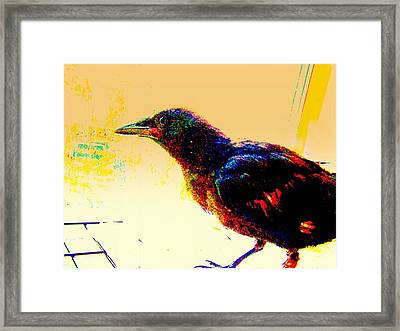 Crow Walk Framed Print by YoMamaBird Rhonda