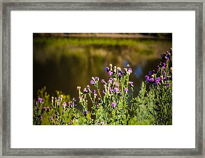 Crowd Of Purple Thistles Framed Print