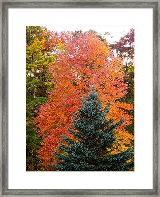 Crowning Glory Of Autumn Framed Print by Randy Rosenberger