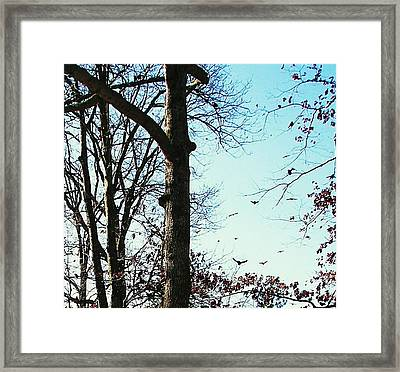 Framed Print featuring the photograph Crows In For Landing by Pamela Hyde Wilson
