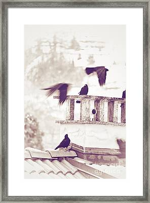 Crows On A Roof Framed Print by Silvia Ganora