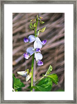 Crucian Wild Orchid Framed Print by David Alexander