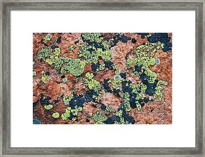 Crustose Lichens On Granite, Killarney Framed Print by Mike Grandmailson