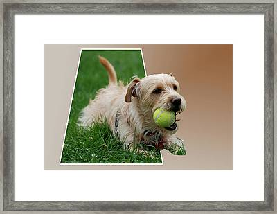 Framed Print featuring the photograph Cruz My Ball by Thomas Woolworth