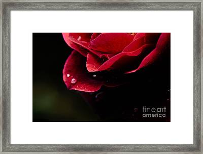 Framed Print featuring the photograph Crying Rose by Tamera James