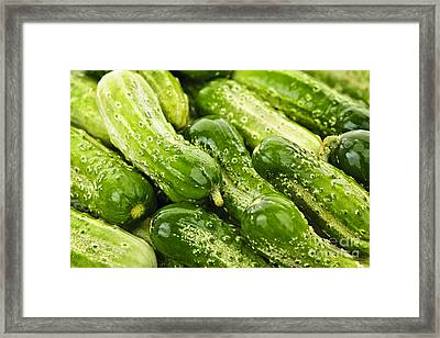 Cucumbers  Framed Print by Elena Elisseeva