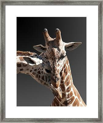 Cuddling Framed Print