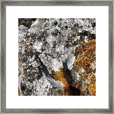 Cumbrian Lichens Framed Print