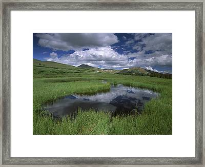 Cumulus Clouds Reflected In Pond Framed Print by Tim Fitzharris