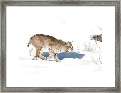 Cunning Cat Feet Framed Print