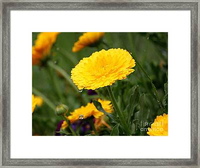 Cup Floweth Over Framed Print by Erica Hanel
