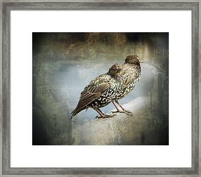 Curb Your Enthusiasm Framed Print by Barbara  White