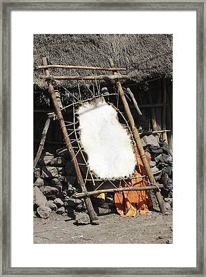 Curing Animal Skin Framed Print by Photostock-israel