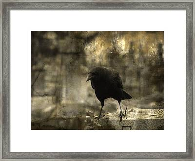 Curiosity Of The Graveyard Crow Framed Print
