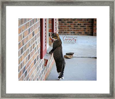 Curiosity Inspirational Cat Photograph Framed Print
