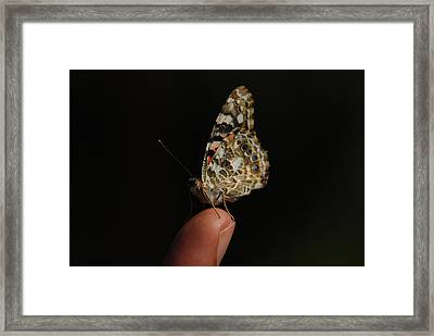 Framed Print featuring the photograph Curious Butterfly by Tam Ryan