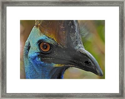 Curious Cassowary Framed Print