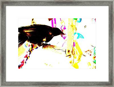 Curious Crow Framed Print