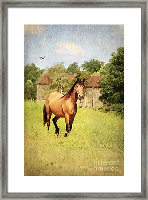Curious Framed Print by Darren Fisher
