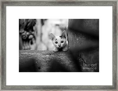 Curious Framed Print by Dean Harte