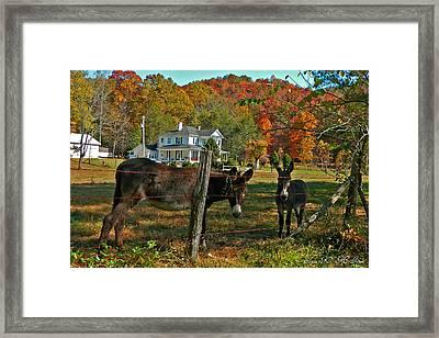 Curious Donkeys  Framed Print