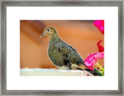 Curious Dove Framed Print by Mariola Bitner