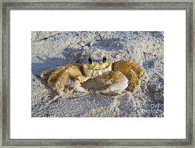 Curious Framed Print